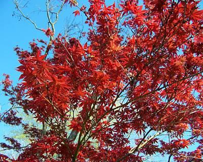 Red Photograph - Fire Tree I by Jai Johnson