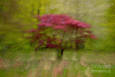 Icm Photograph - Fireball In Motion I by Richard Thomas