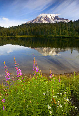 Mt. Rainier Photograph - Fireweed Reflections by Mike  Dawson
