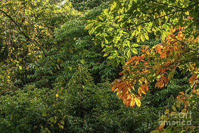 Photograph - First Signs Of Autumn by Steve Purnell