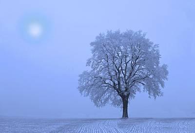 Photograph - First Snow  by David Dehner