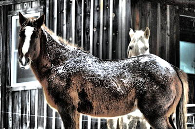 Horse Photograph - First Snow by Emily Stauring