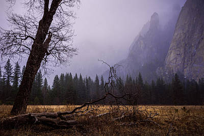 Tree Photograph - First Snow In Yosemite Valley by Priya Ghose