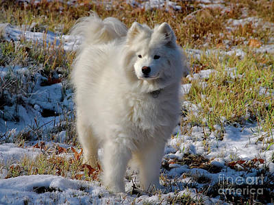 Dogs In Snow Photograph - First Snow by Lois Bryan