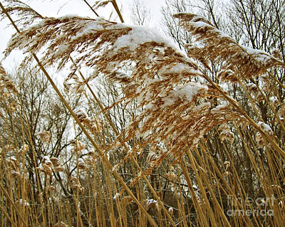 All Faa Photograph - First Snow Of The Season by Mary Ann Weger