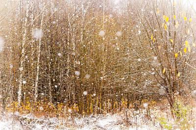First Snow. Snow Flakes I Print by Jenny Rainbow