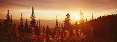 Firweed At Sunset, Whitefish, Montana Print by Panoramic Images