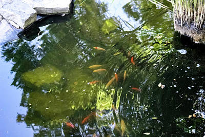 Fish In A Pond Print by Cynthia Woods