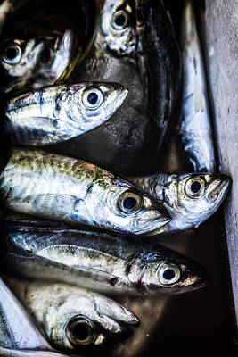 Fisher Photograph - Fish by Joana Kruse