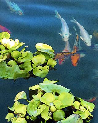 Fish-koi In A Pond, Triptych Part 1 Original by Arthur Babiarz
