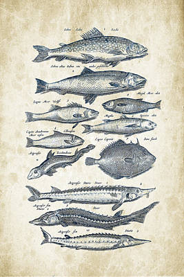 Fish Digital Art - Fish Species Historiae Naturalis 08 - 1657 - 23 by Aged Pixel