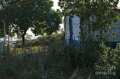Trees Photograph - Fishermans Wooden Cabin by Angelo DeVal