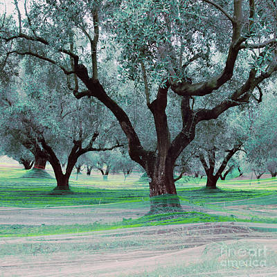 Network Photograph - Fishing Olives - Verda by Steffi Louis