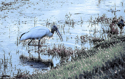 Fish Photograph - Fishing Stork by Michael Frizzell