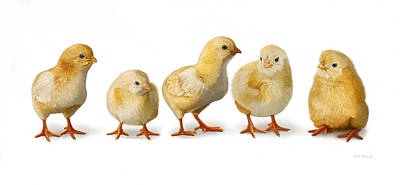 Cute Digital Art - Five Chicks In A Row by Bob Nolin