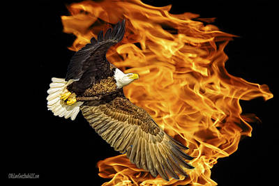 Freedom Photograph - Flaming American Bald Eagle by LeeAnn McLaneGoetz McLaneGoetzStudioLLCcom