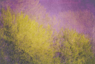 Bright Photograph - Flaming Foliage 3 by Ari Salmela