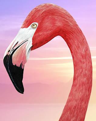 Flamingo Drawing - Flamingo by Jessica LaFree