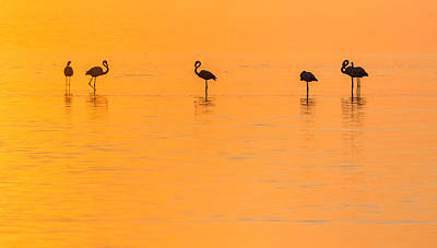 Afternoon Photograph - Flamingo Sunset - Silhouette Photograph by Duane Miller