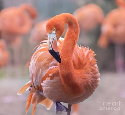 Flamingo, The Orange Beauty Print by Rima Biswas