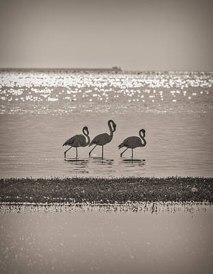 Nature Photograph - Flamingo Trio - Walvis Bay, Namibia Photograph by Duane Miller