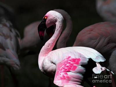 Flamingo Mixed Media - Flamingo by Wingsdomain Art and Photography