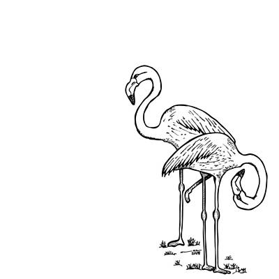 Flamingo Drawing - Flamingoes - Black And White by Karl Addison
