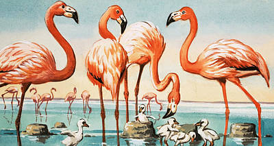 Flamingo Painting - Flamingoes by English School