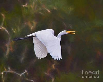 Yellow Beak Painting - Flaps Down - Egret In Flight by Kerri Farley
