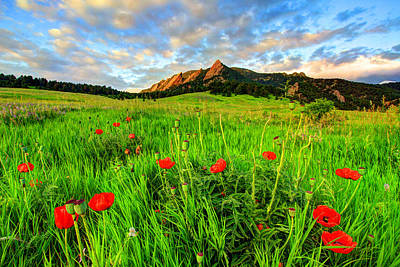 Fort Collins Photograph - Flatiron Poppies by Scott Mahon
