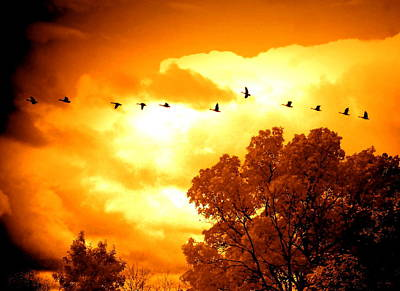 Bird Photograph - Flight Home by Emily Stauring