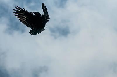 Crow Photograph - Flight by Seattledaze Art
