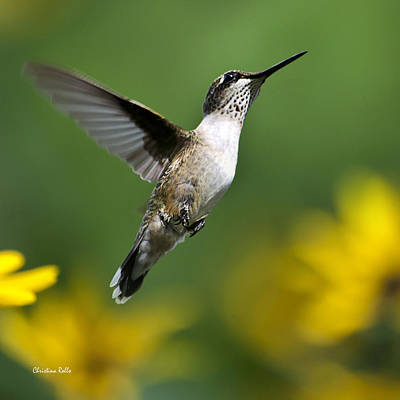 Flight Of Fancy Hummingbird Square Print by Christina Rollo