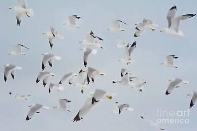 Photograph - Flight Of Seagulls by Andrea Kollo