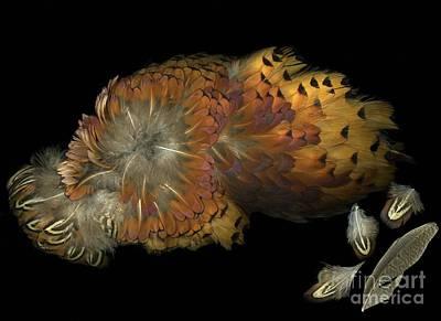 Pheasant Mixed Media - Flight Of Sleepy Hollow by Christian Slanec