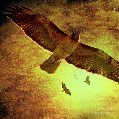 Red Tail Hawk Photograph - Flight Of The Golden Hawks . Square . 7d5066 by Wingsdomain Art and Photography