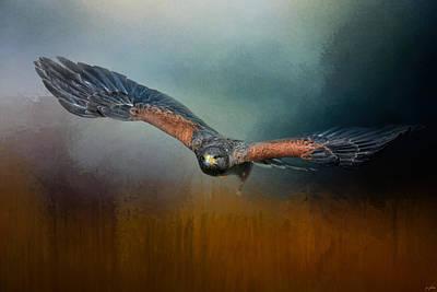 Flight Of The Harris Hawk Print by Jai Johnson