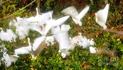Ibis Digital Art - Flight Of The Ibises by David Lee Thompson
