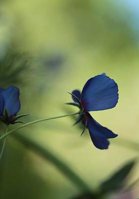 Mystifying Photograph - Flight Of The Lobelia  by Connie Handscomb