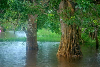 Amazon Photograph - Floaded Trees In The Amazon River by HQ Photo