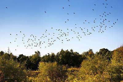 Of Birds Photograph - Flock Of Birds by Christina Rollo