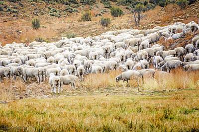 Sheep Photograph - Flock Of Sheep by LeeAnn McLaneGoetz McLaneGoetzStudioLLCcom