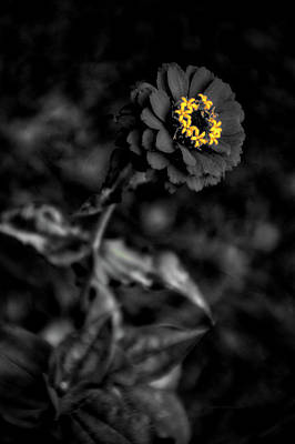 Floral October Zinnia End Of Season Sc 02 Vertical Print by Thomas Woolworth