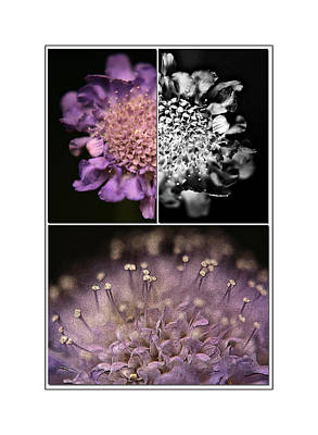 Floralicious  Print by Bonnie Bruno