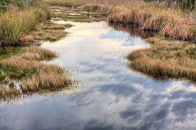 Flordia Wetlands Print by JC Findley