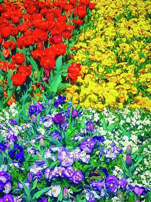 Floriade Photograph - Floriade - Blaze Of Colour by Tony Crehan