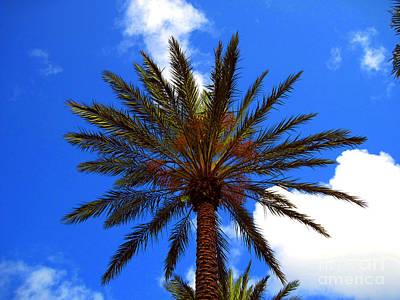 Florida Palm   6 Print by Susanne Van Hulst
