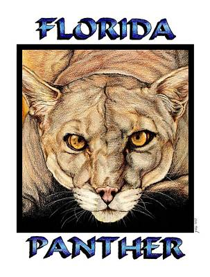 Color Pencil Drawing - Florida Panther by Sheryl Unwin