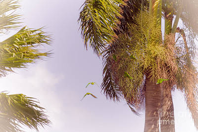 Florida Parrots Print by Claudia M Photography