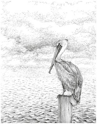 Stormy Weather Drawing - Florida Pelican by Crazy Cat Lady
